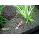 Shrimp Soil
